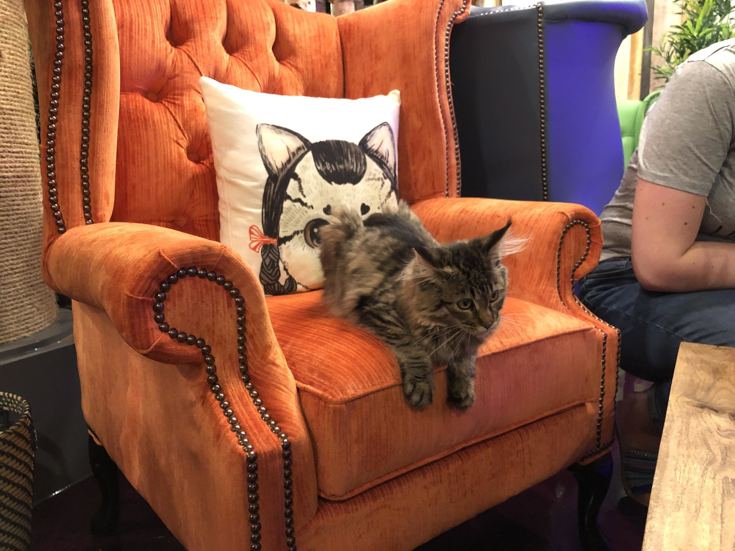 Tabitha on Armchair