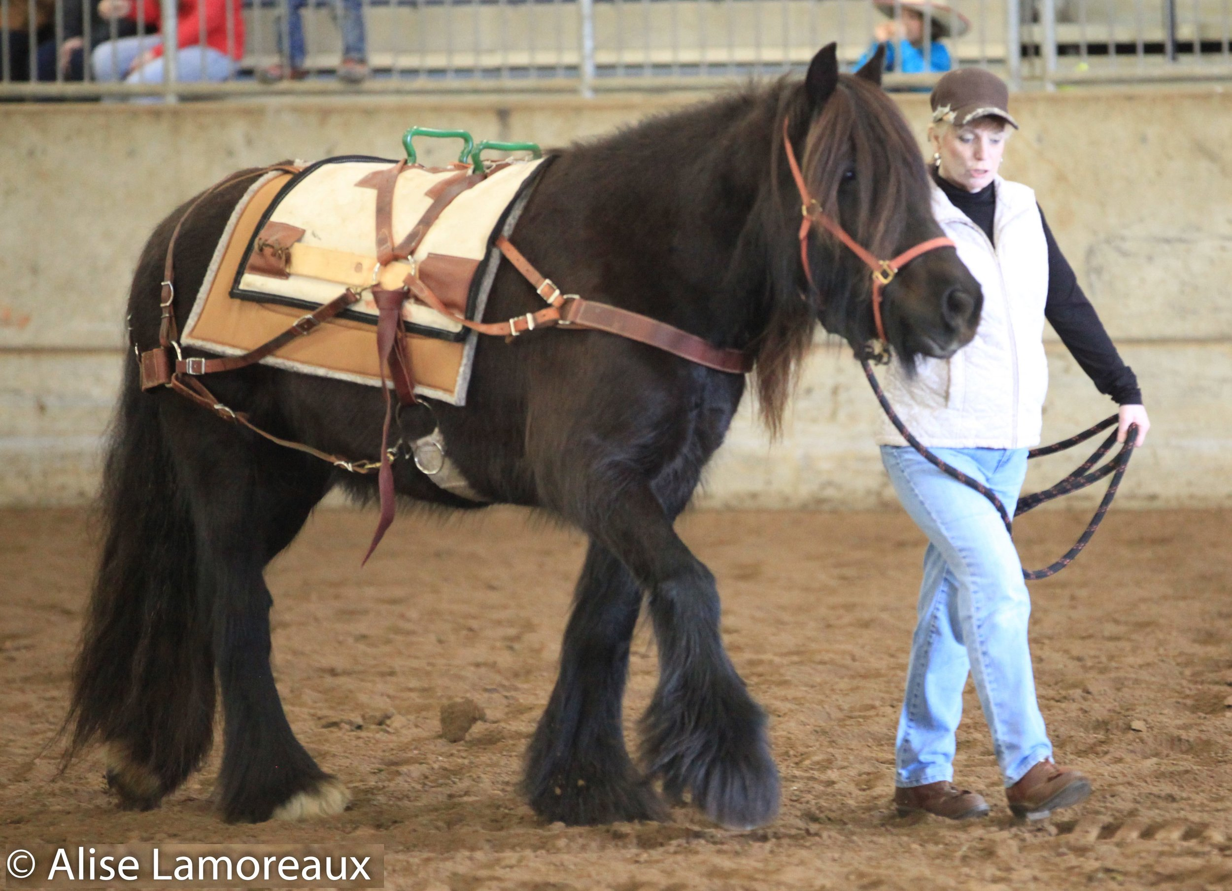 Ebony Jan carries a pack saddle for the 2017 NW Horse Expo. IMG_8809 optimized cropped optimized.jpg