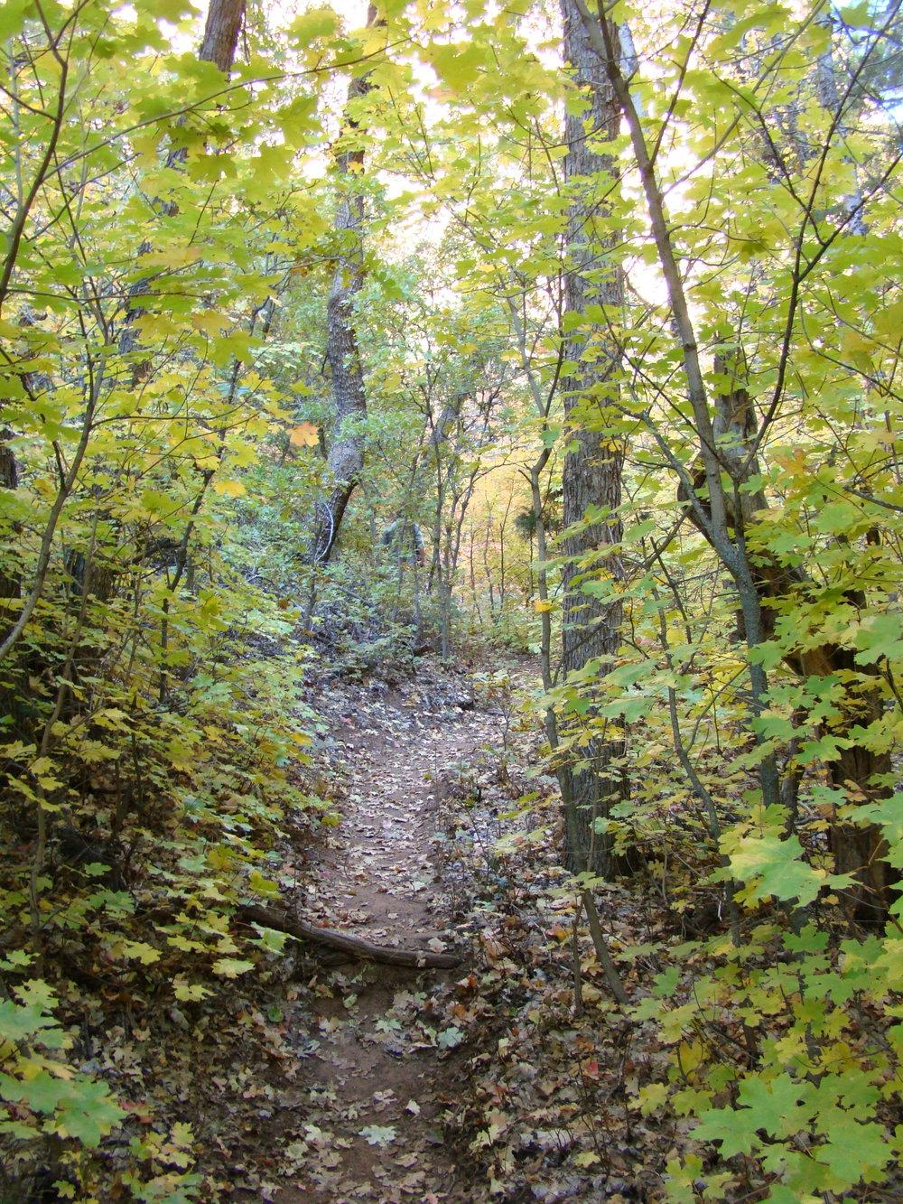 Oak Pine Forest.jpeg