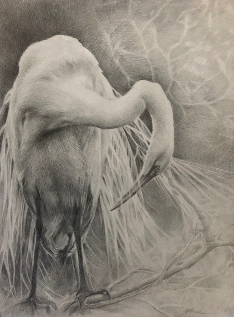 """""""Great Egret in Spring"""", silverpoint drawing by E. Baskin, $1,200 (sold)"""