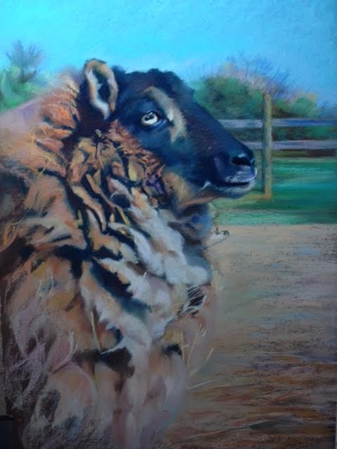 """""""A Week Before Shearing,"""" pastel by E. Baskin, 18""""x24"""", Best in Show, Queen Anne's County Centre for the Arts, """"Animals, Wild and Domestic Show,"""" (February, 2016), $1,600"""