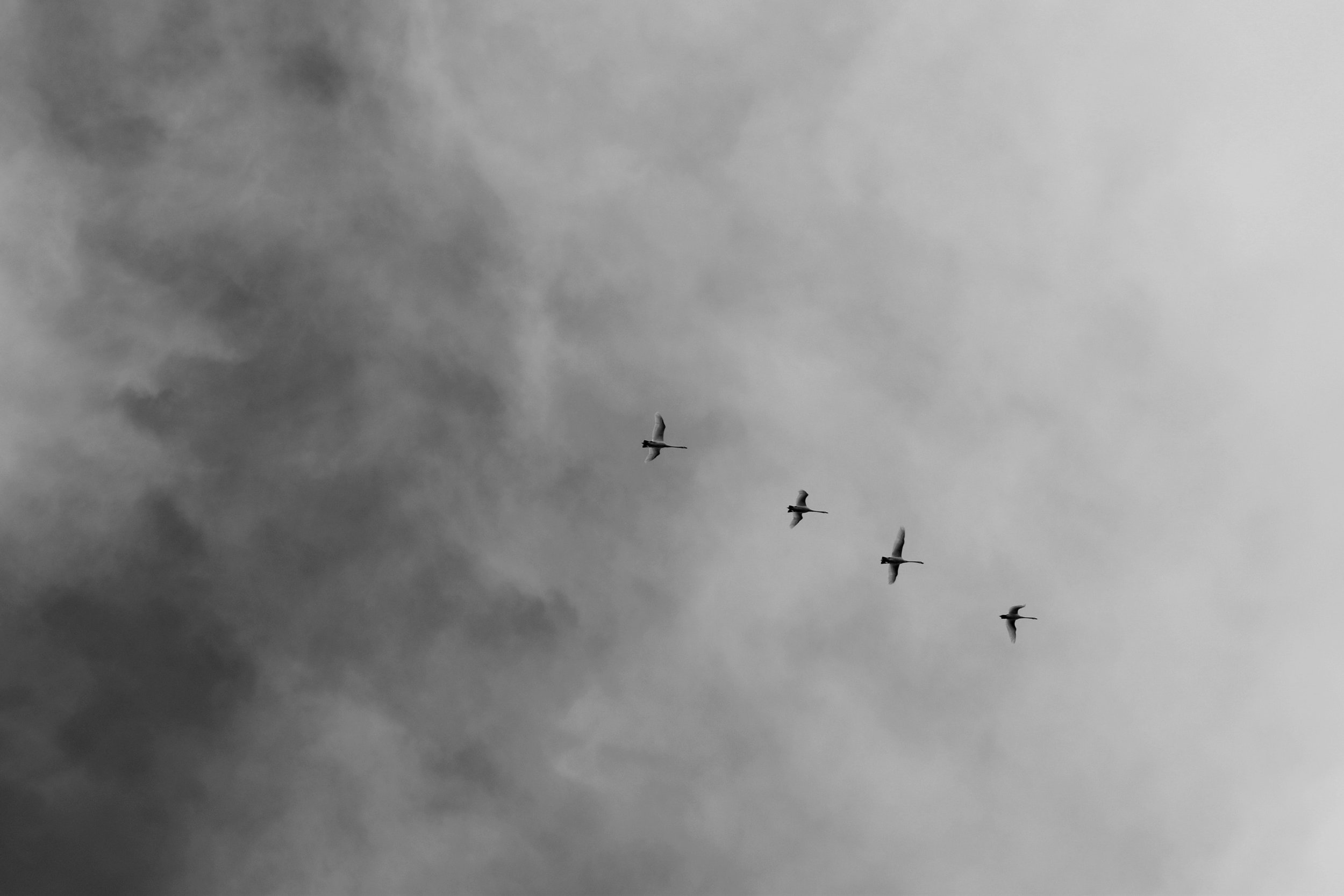 action-black-and-white-clouds-937766.jpg