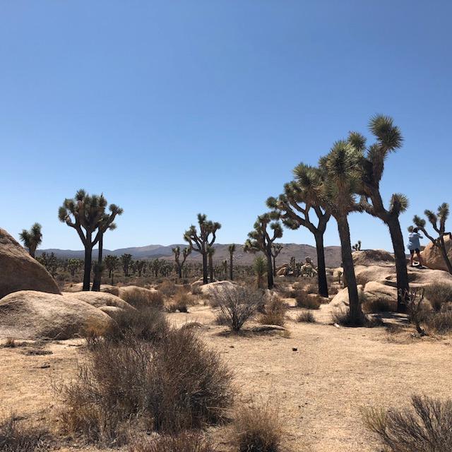 The Majestic Mojave High Desert