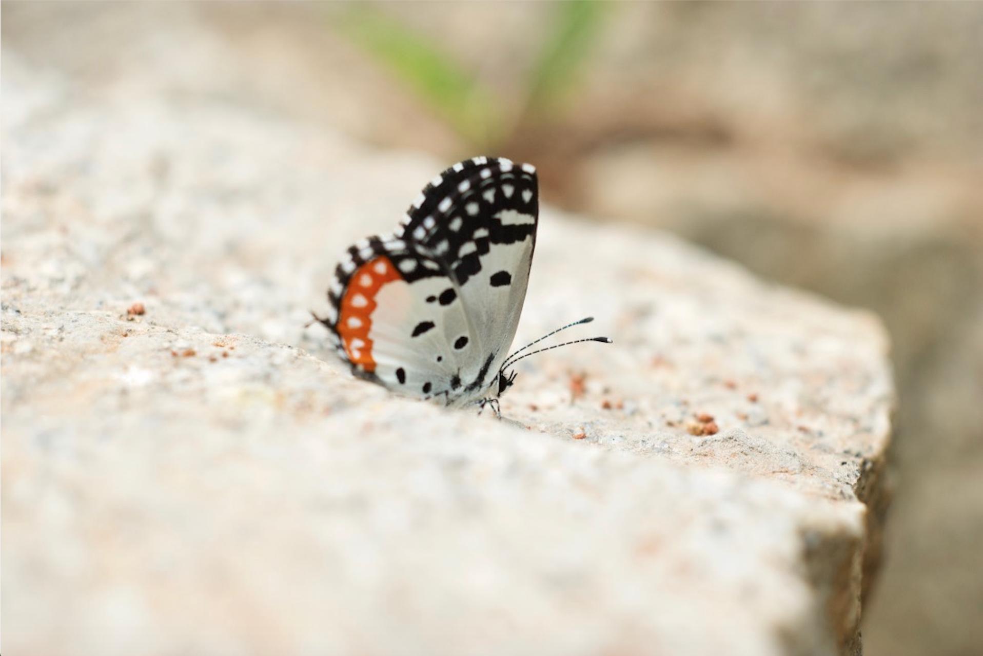 butterfly at navadarshanam.jpg