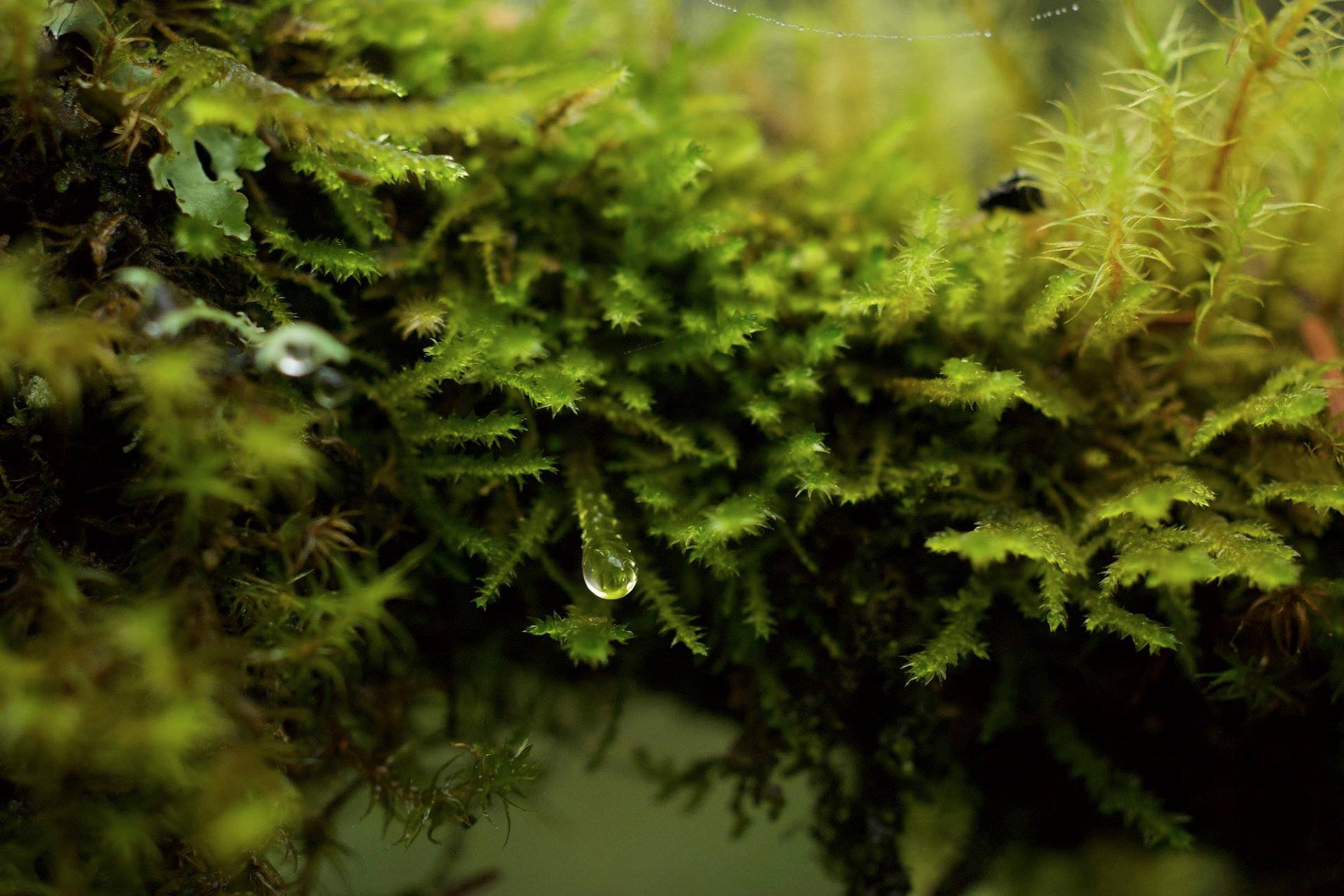 dripping moss.jpg