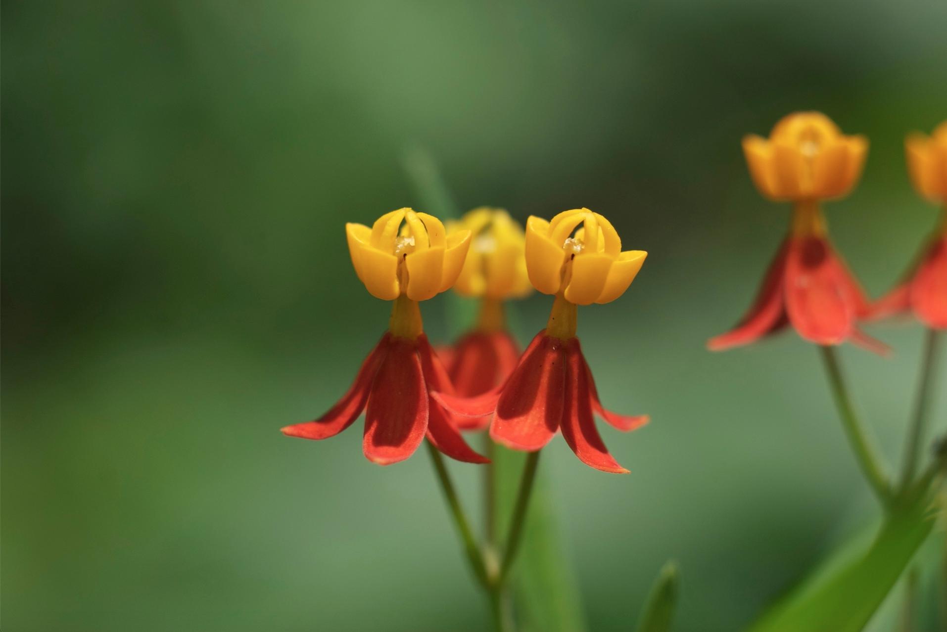 flor en el mariposario.jpg