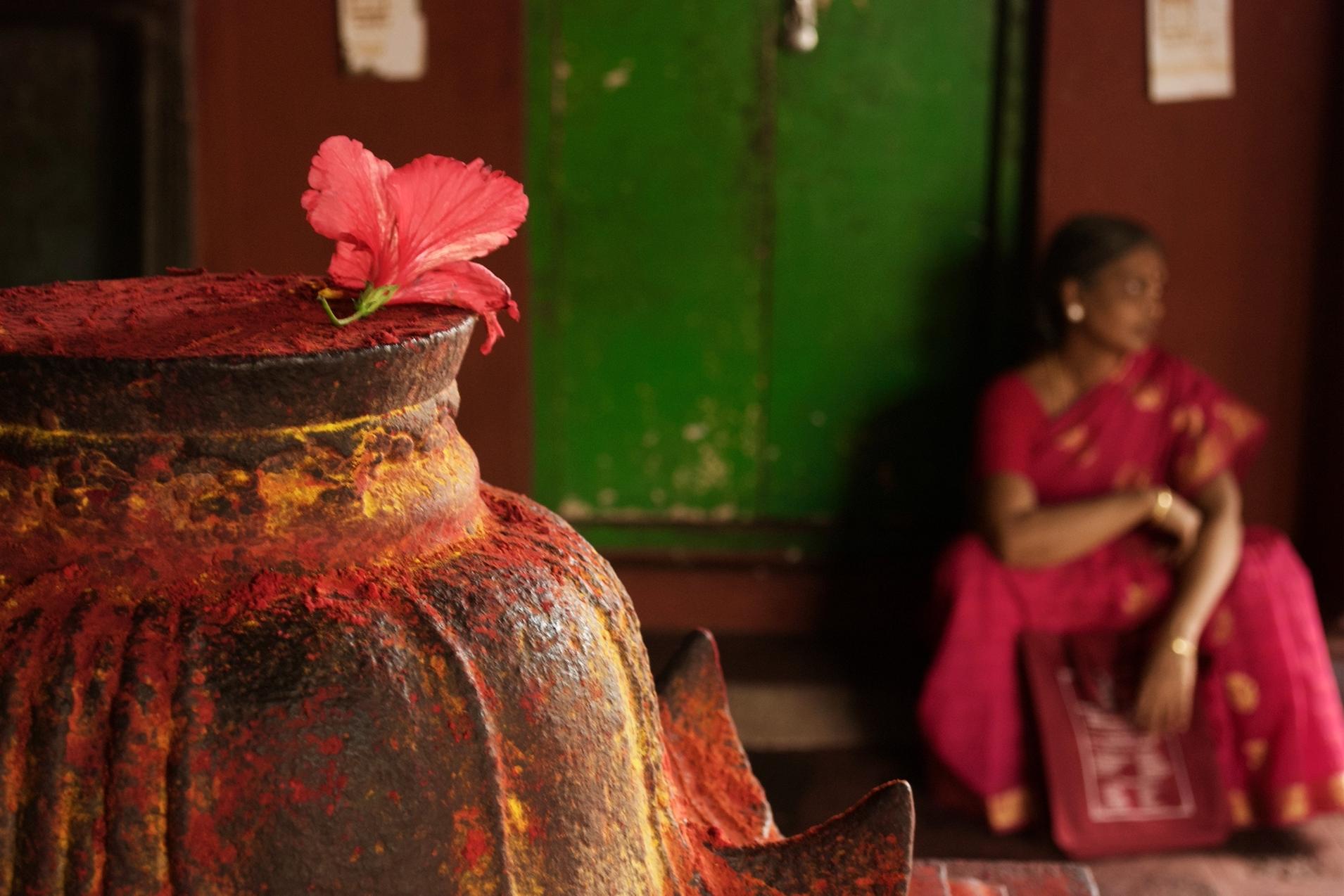 hibiscus at kali temple chidambaram.jpg