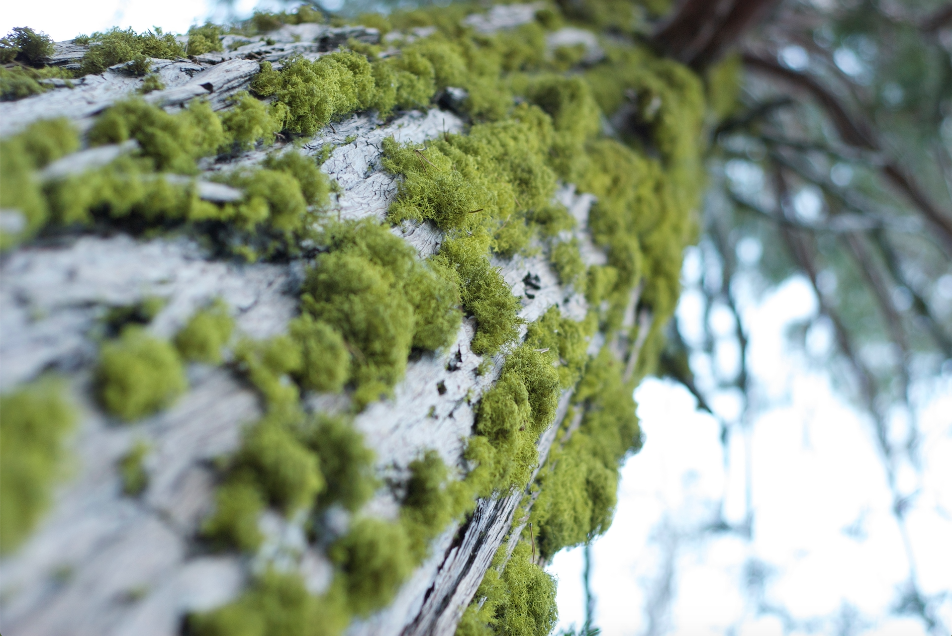 lime green moss at castle lake.jpg