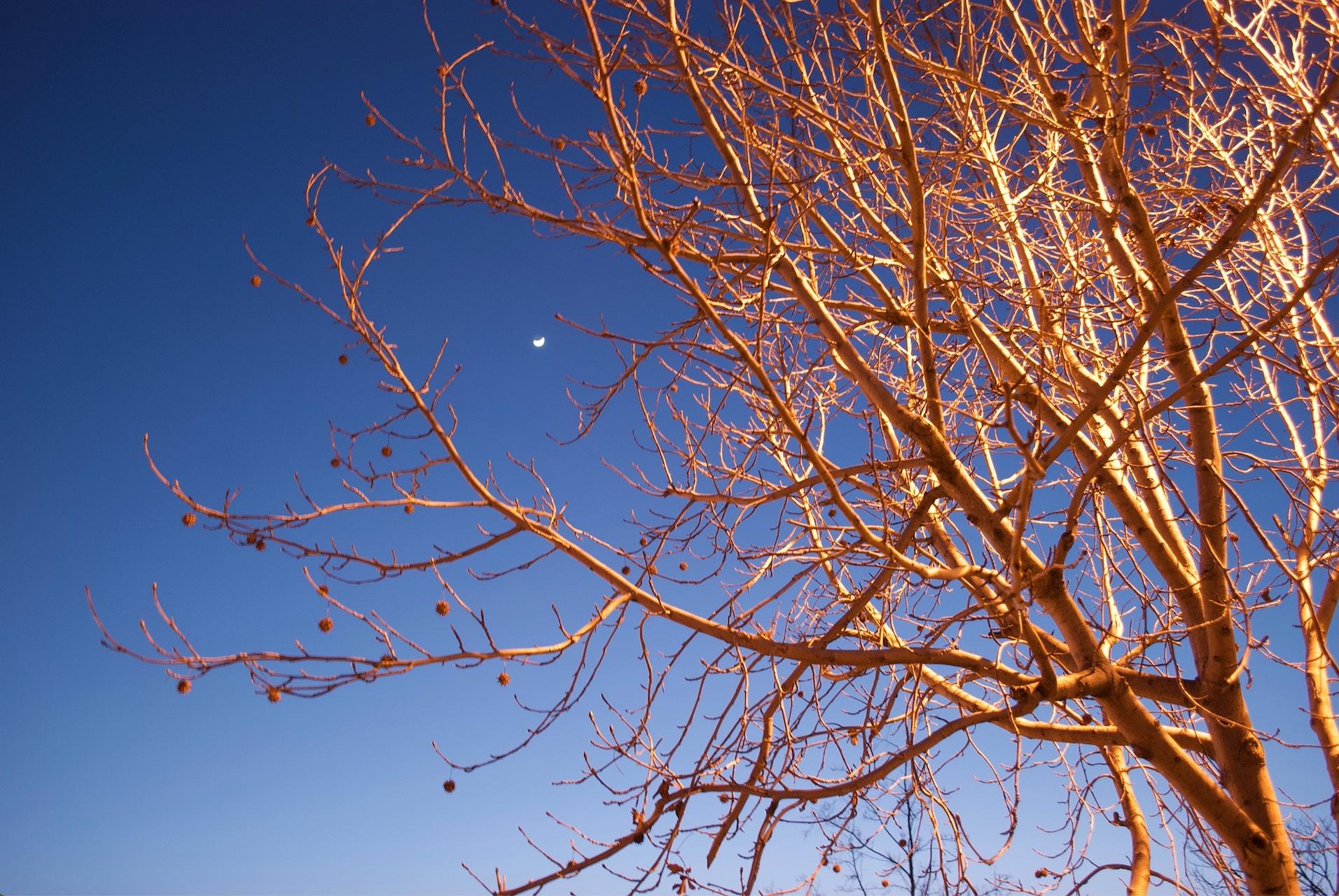 moon in berkeley.jpg