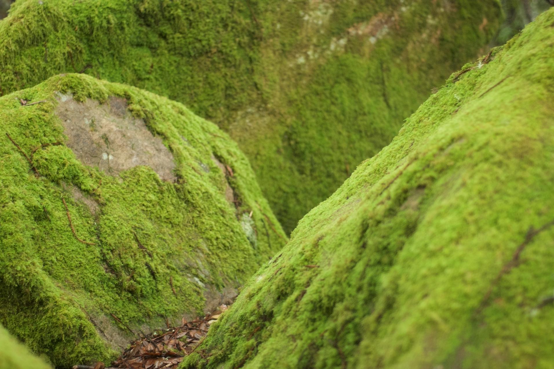 moss rocks at salt point.jpg