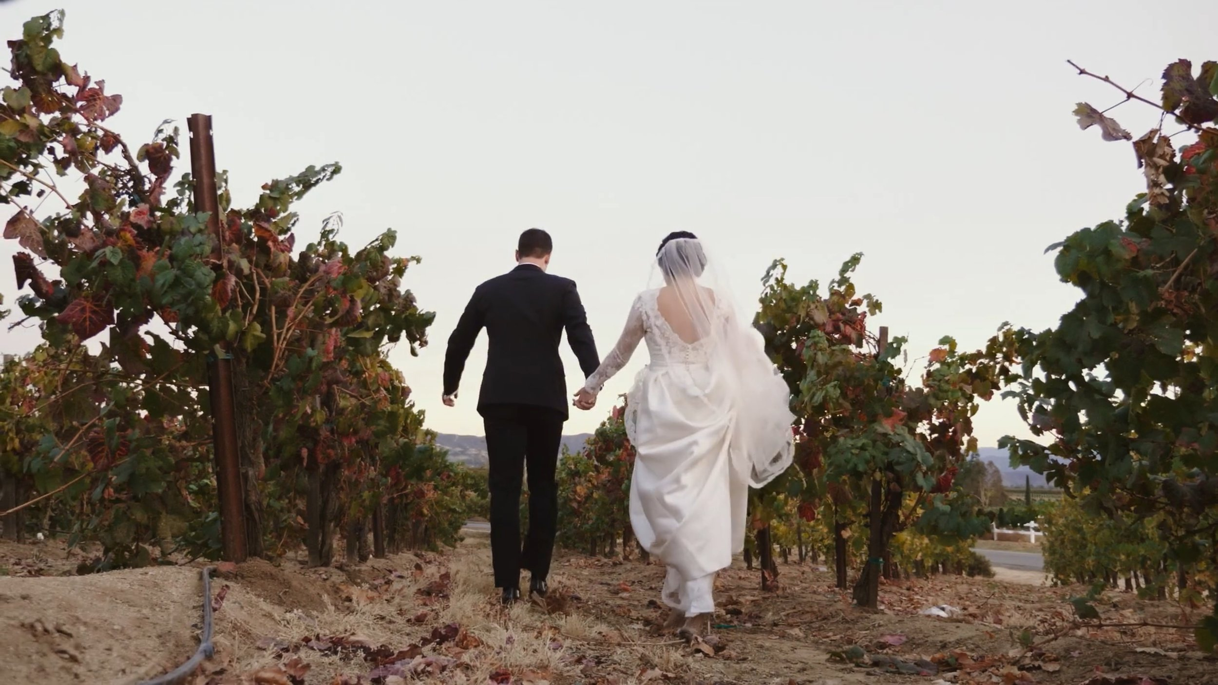 A bride and groom walking through the grape fields of a winery.
