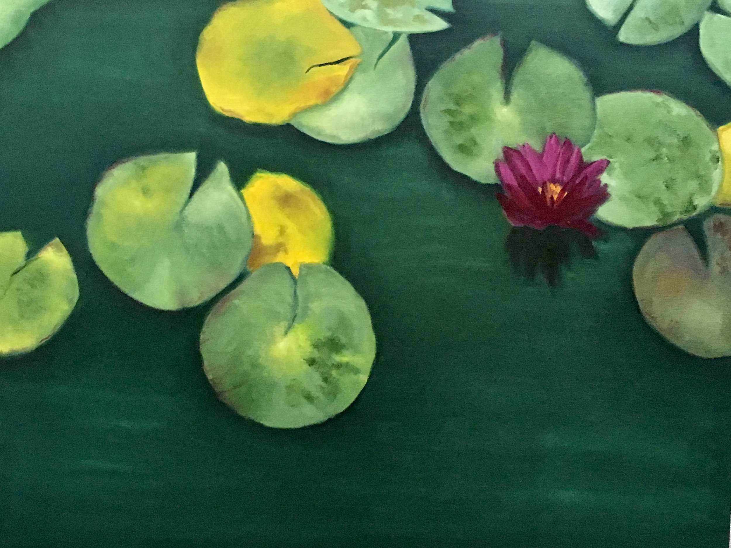 """Fuchsia Water Lily Serene"" 