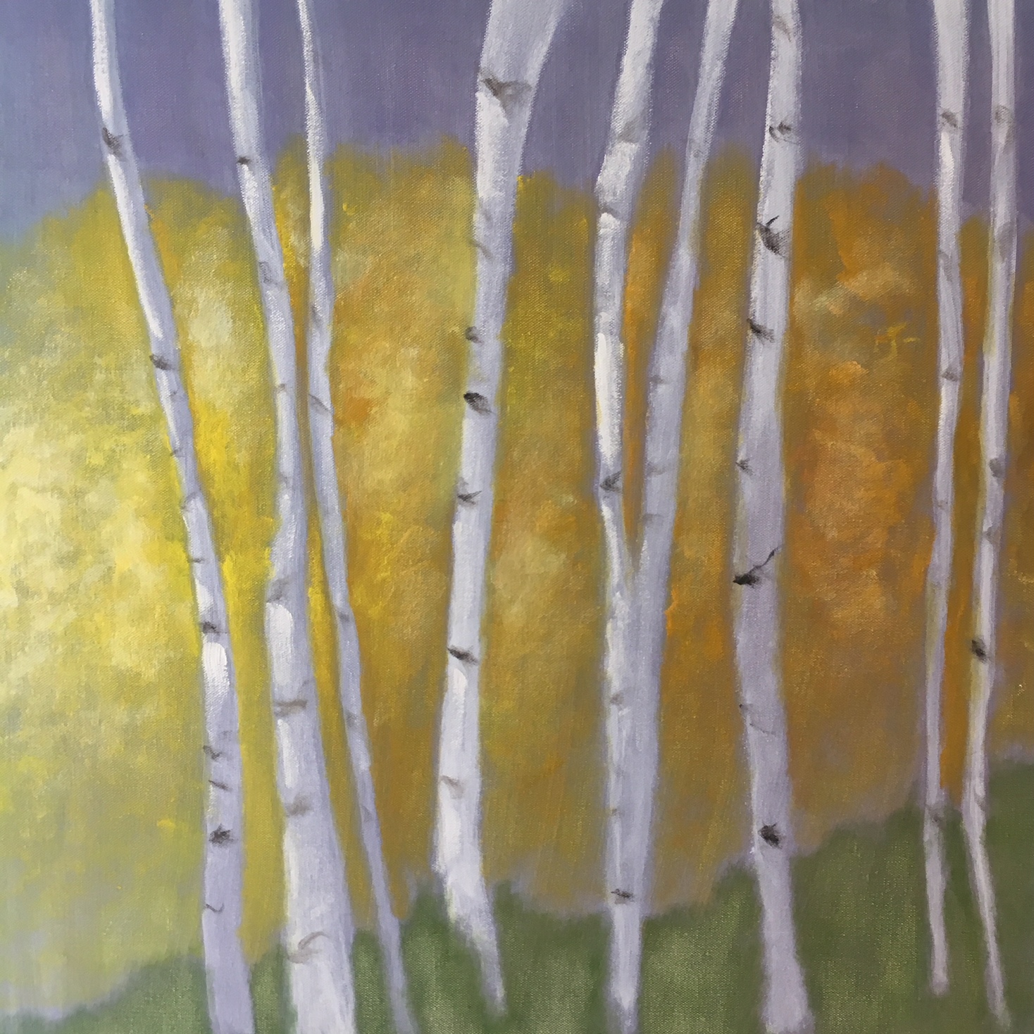 """White Birch Golden Leaves"" 
