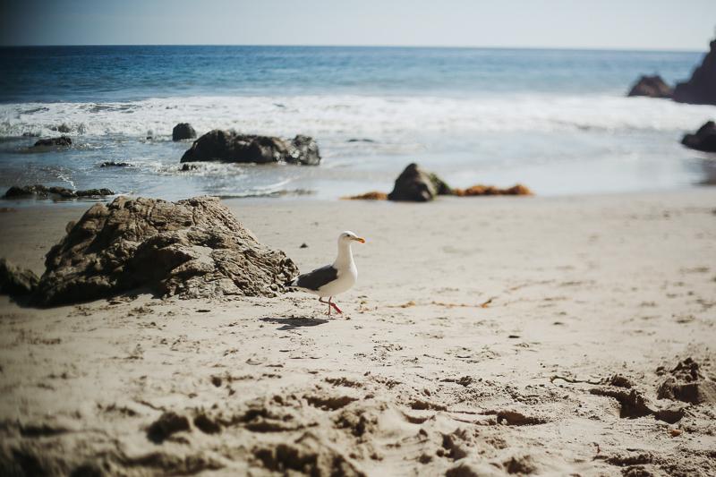 californiat-52.jpg