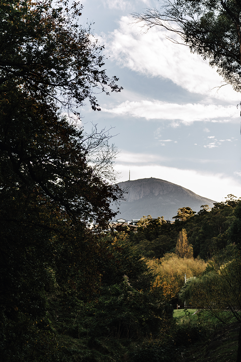 View of kunanyi Mount Wellington from the Hobart Rivulet Walking track in West Hobart