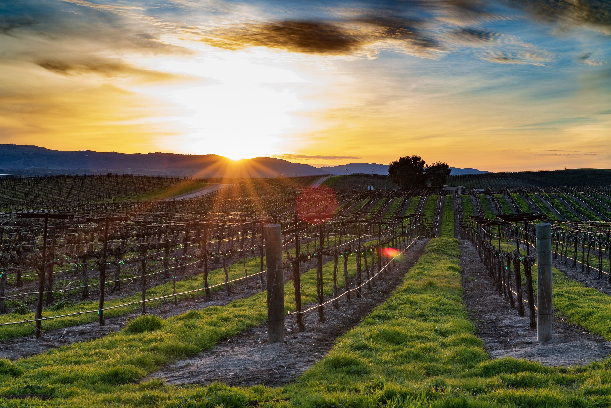 Imagine the beauty of a Napa Valley type setting, but with cannabis plants instead of grape vines