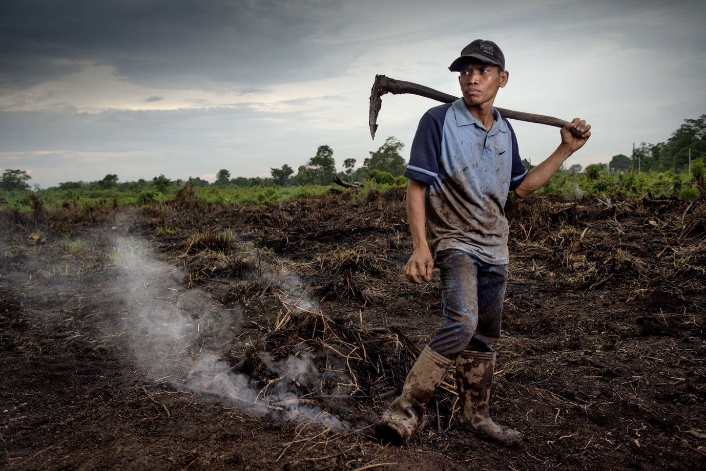 Worker at a palm oil plantation, Sumatra / Indonesia