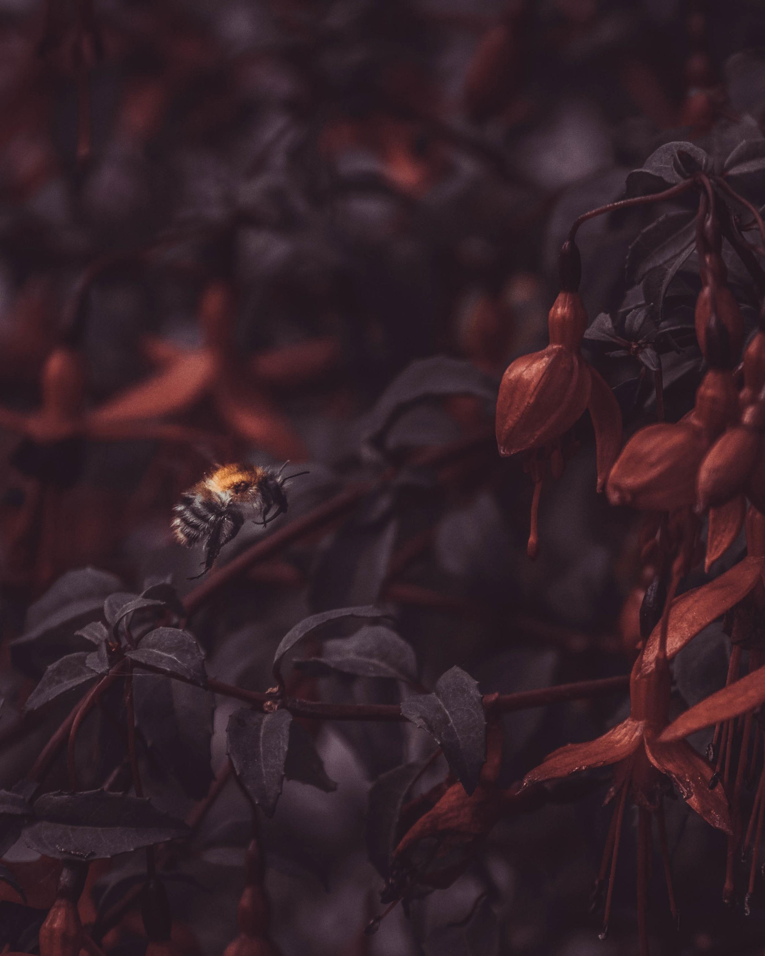 Betta Bees - Bee.jpg