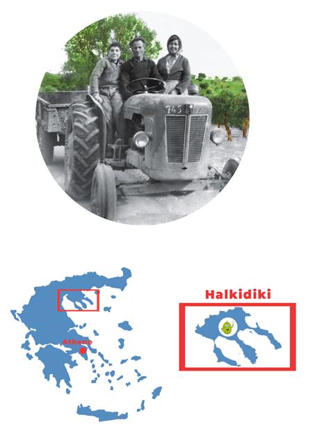 """Eleolado - Eleolado's missie is om elk jaar verse groene olijfolie, afkomstig van de eerste persing te produceren. Het unieke van de Halkidiki olijf(olie) is dat dit soort olijven afkomstig is van een speciaal ras, namelijk de """"hondroelia"""", ook wel dikke olijf. Dit ras komt ten volle tot zijn recht doordat alle omgevingsfactoren kloppen; de ligging aan de Egeïsche zee, de bescherming van de bergen, de wind die door de bomen kan waaien en de rode grond zorgen voor een verrassend resultaat; een olie met een unieke fruitige smaak en een aangename kruidige bitterheid dat iedere druppel heerlijk maakt.""""Alles wat je aandacht geeft groeit. Het is mooi om te zien dat oude bomen door generaties heen vruchten blijven produceren en ons blijven geven wat de natuur schenkt. Met dit idee in mijn gedachten ben ik """"Eleolado"""" gestart, een klein familiebedrijf waar ik mijn eigen olijfolie produceer. Eerlijk, puur natuur, zonder toegevoegde middelen, zo van de eerste koude persing, ongefilterd de fles in.""""Giorgos Gogos"""