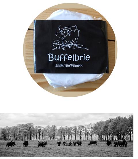 """Buffalo Farm Twente - Waar buffels en koeien opgroeien en gemolken worden. De melk? Die wordt verwerkt in dagverse Mozzarella.De Twentse Buffalo Farm begon in 2009 met 38 drachtige buffels, welke inmiddels is uitgegroeid tot een kudde. Er zijn kalfjes van een paar weken en buffels van 10 jaar. Naast buffels worden er ook Holstein koeien gehouden, voornamelijk roodbond koeien. Deze zijn gehouden na de bedrijfsovername door de ouders van Alfons en Andra, die nu de boerderij runnen. In 2011 is de Twentse Buffalo Farm begonnen met de eerste buffelmelk te verwerken waarna er een jaar later is besloten dagverse Buffelmozzarella te maken.""""Gennaro is de naam van onze kaasmaker. Hij is een Italiaanse vakman en maakt elke dag verse Buffelmozzarella. Hij is sinds 2012 werkzaam op ons bedrijf en in de loop der jaren hebben we onze producten uitgebreid.""""Alfons & Andra"""