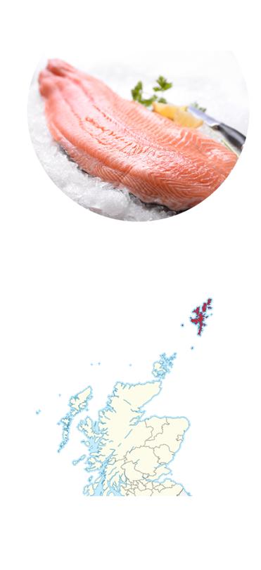Shetland Zalm - Onze zalm wordt gekweekt in één van de meest ruige en afgelegen gebieden ter wereld: de Shetland eilanden. Daar waar de Noordzee en de Atlantische Oceaan samenkomen ontstaan de optimale leefomstandigheden voor de Atlantische zalm: de ideale watertemperatuur door de Golfstroom en de sterke zeestromingen. Alles wordt hier in het werk gesteld om de meeste perfecte zalm te kweken, met zo min mogelijk schadelijke effecten voor de natuur. Deze zalm krijgt natuurlijk voer en wordt gekweekt in ruimere netten. Dit is een sprong voorwaarts voor de natuur en maakt de zalm tot een delicatesse.Wat maakt onze zalm bijzonder?Onze Shetland zalm is gevoerd met natuurlijk voer en krijgt geen antibiotica, wat de kwaliteit van de zalm ten goede komt. Bovendien is de smaak zoeter dan bij de gewone kweekzalm, omdat de Shetland zalm met langoustines, makreel en haring wordt gevoerd. De zalm is duurder, omdat door het natuurlijke voer de zalm minder snel groeit dan middels gemanipuleerde voeding. Tot slot krijgt de Shetland zalm bijna vijf keer meer ruimte dan zalm op andere kwekerijen, zwemt de Shetland zalm vrij rond in de zee en worden de netten in de kweek door duikers schoongehouden. Dit zorgt voor een sterkere, volwassen zalm en is dus steviger en smaakvoller.