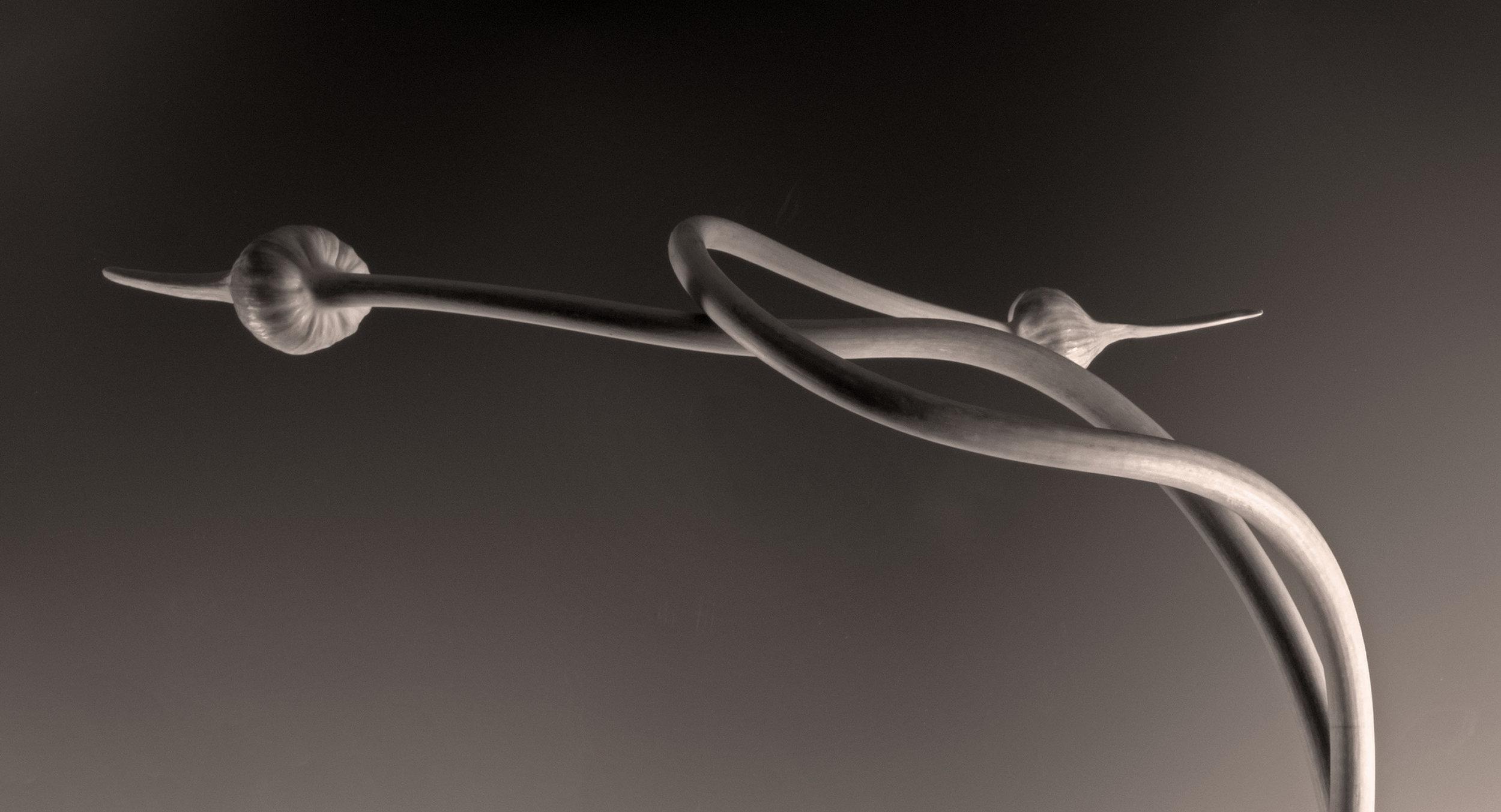 Carol-Lawrence-3-best-figure-8-garlic-fixed.jpg