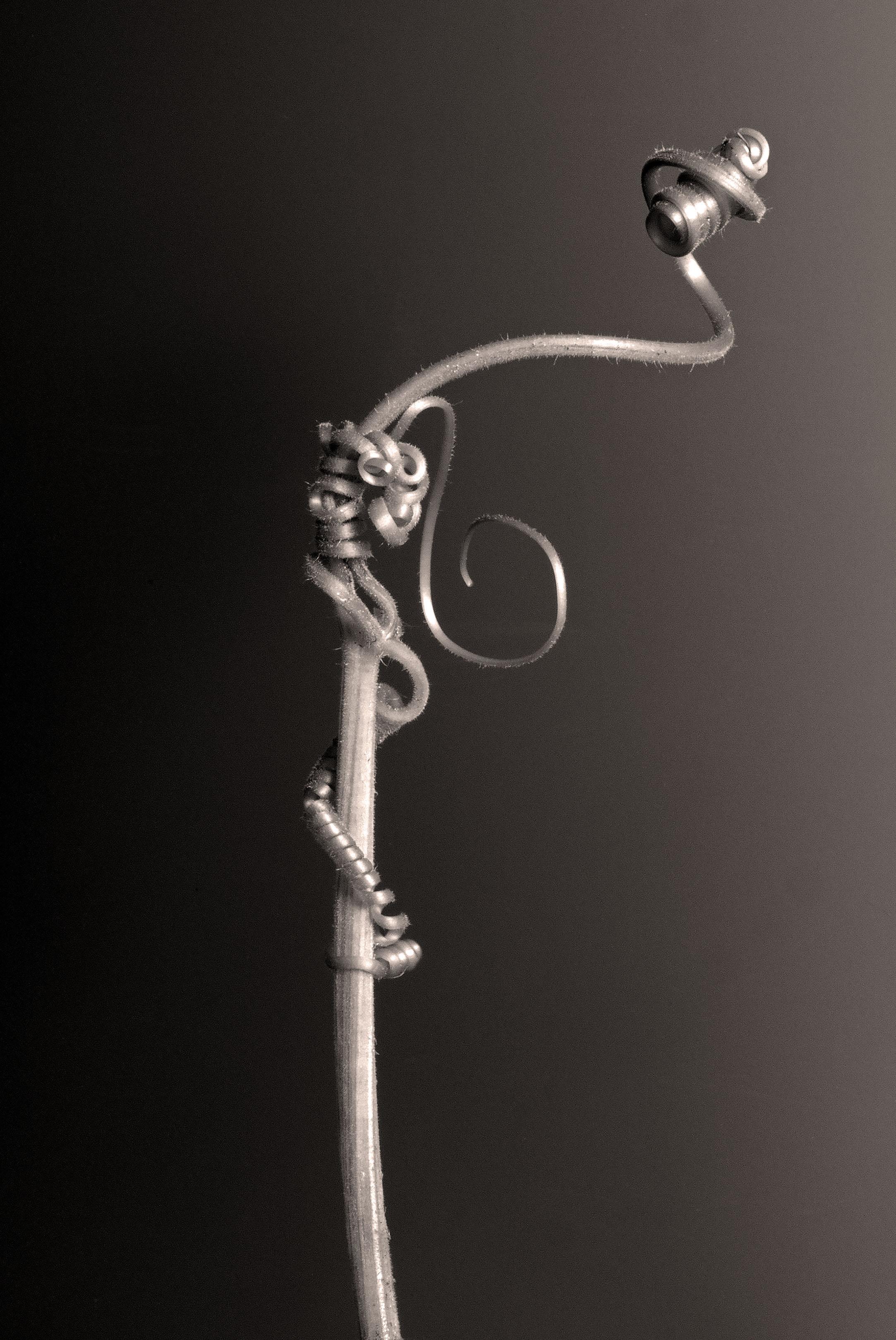 Carol-Lawrence-10-Lovely-long-tendril.jpg