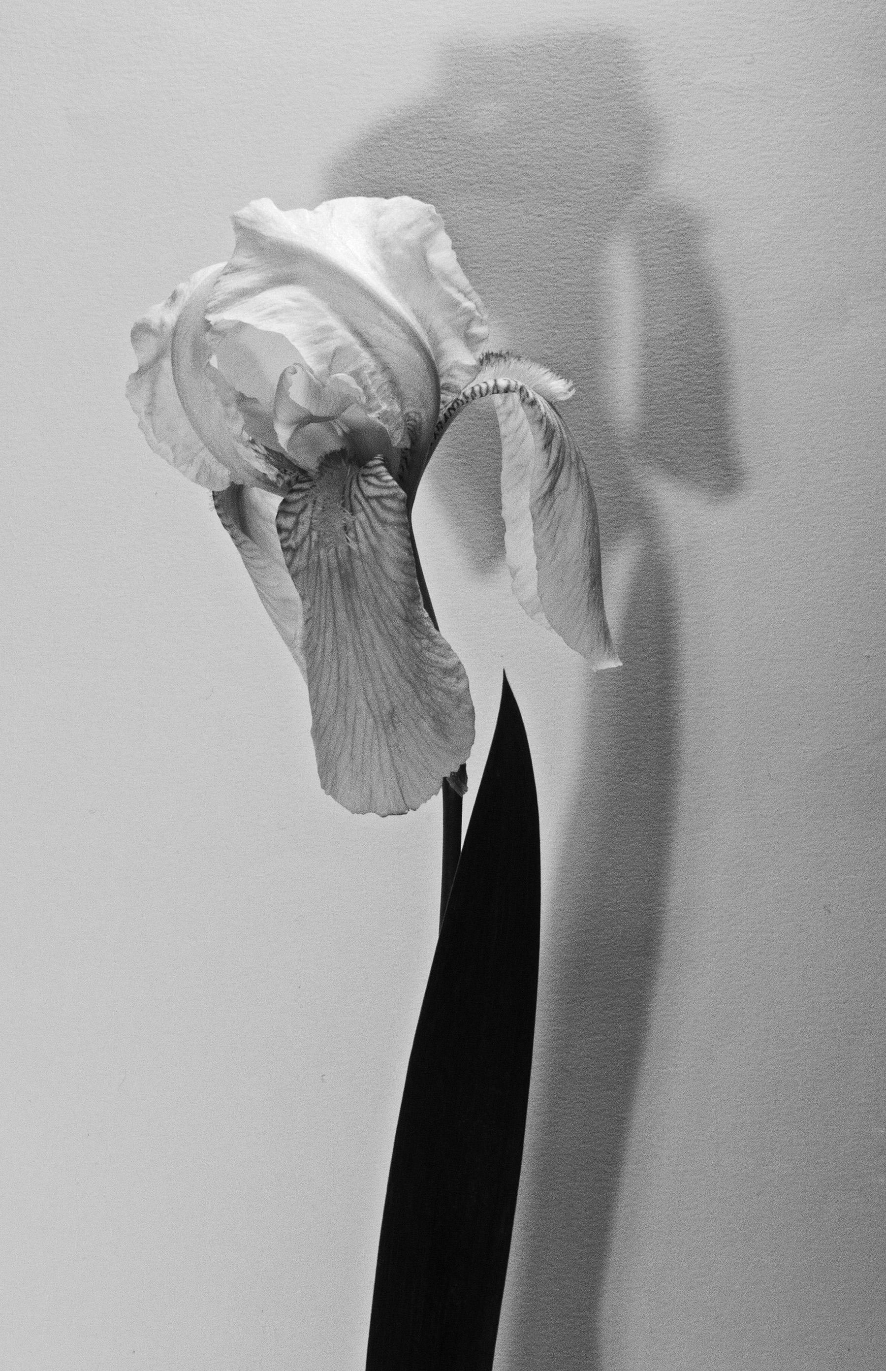 Carol-Lawrence-One-Shadow-Floretina-5-16-2.jpg