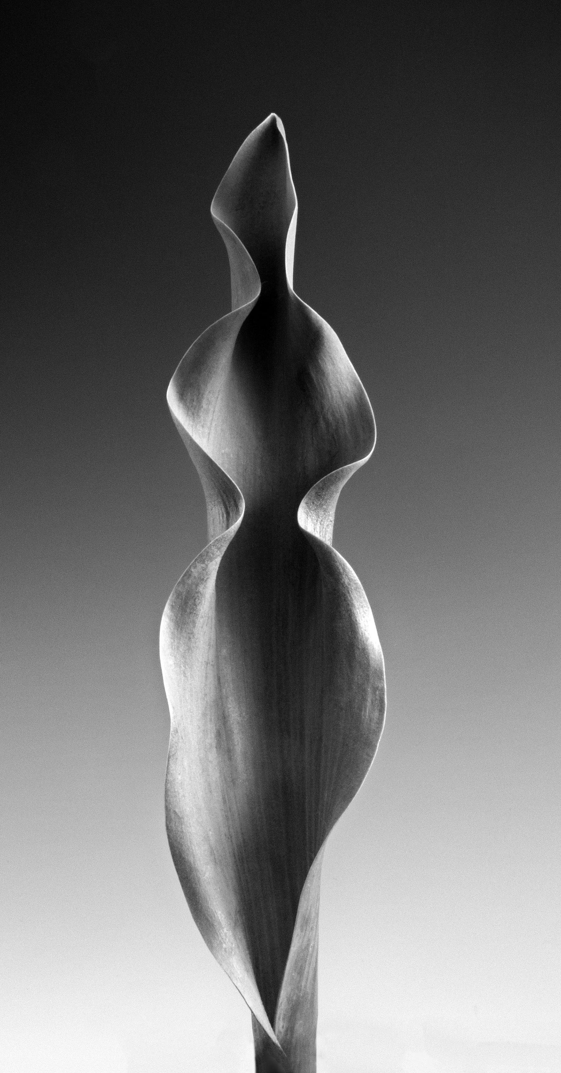 Carol-Lawrence-One-Beauty-Curved-Leaf-6-16.jpg