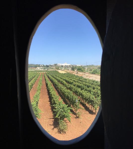 i pastini faraone vineyard.jpg