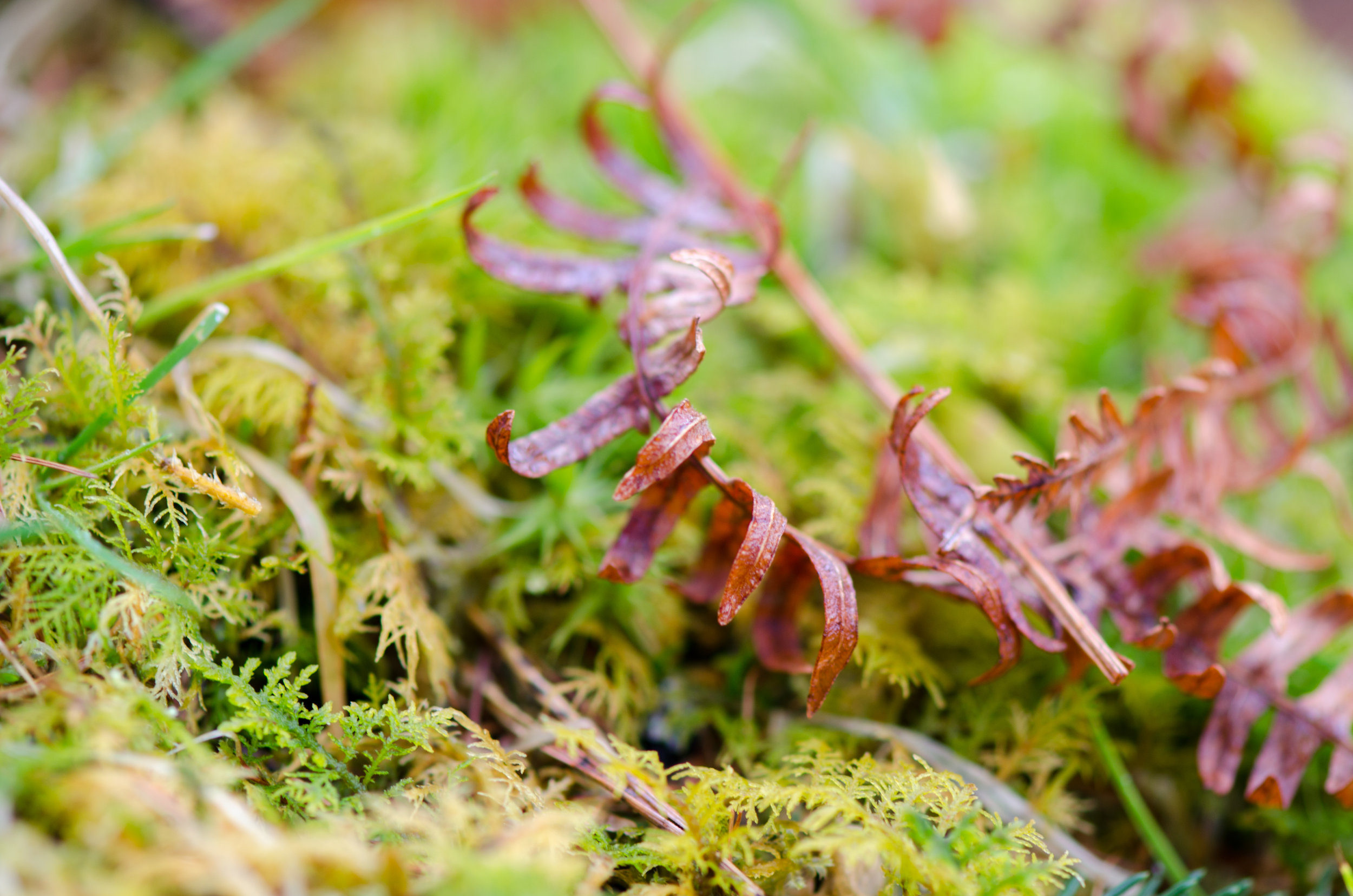 a close-up on some ferns