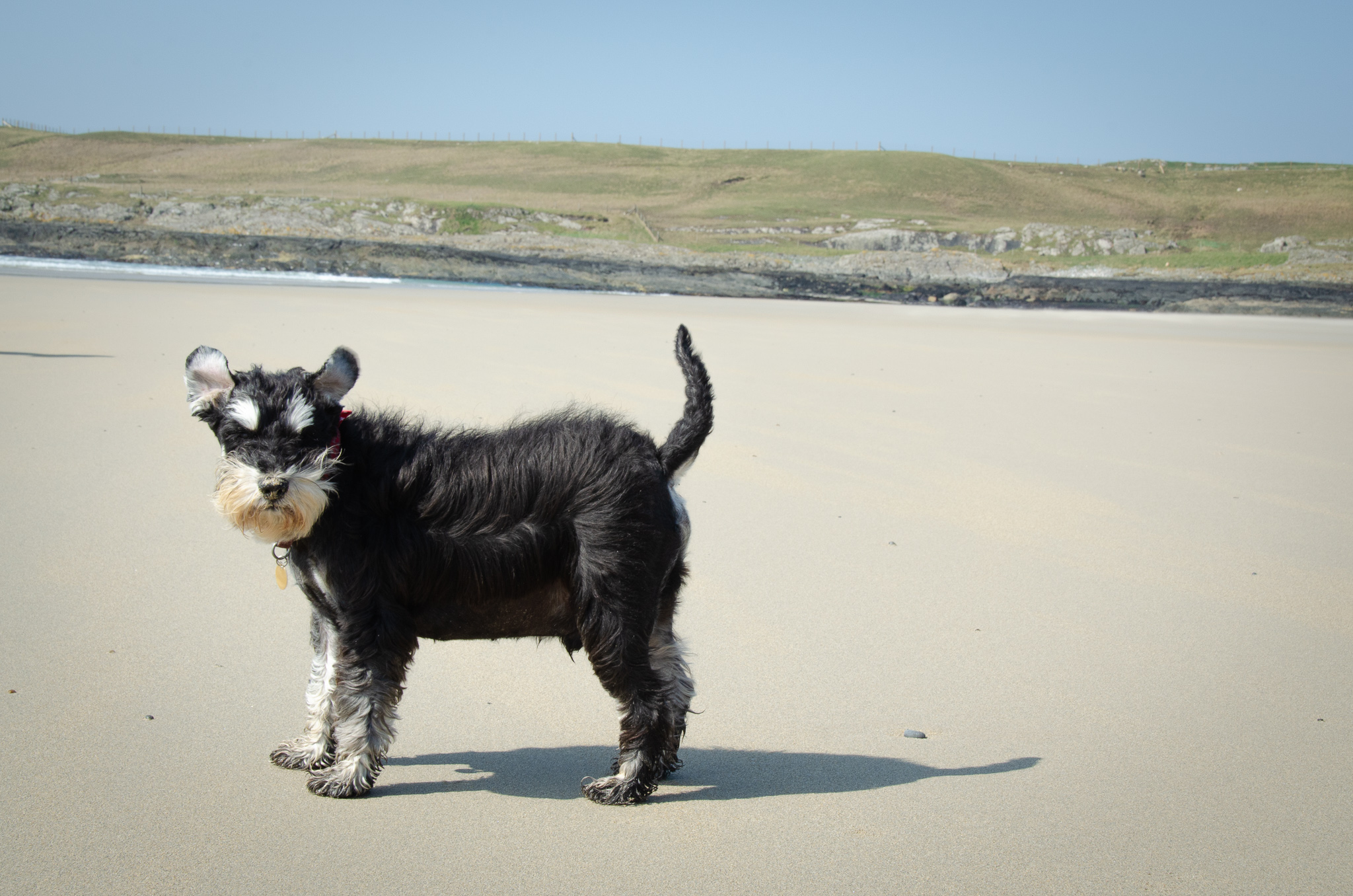A windy day at the Beach on Islay