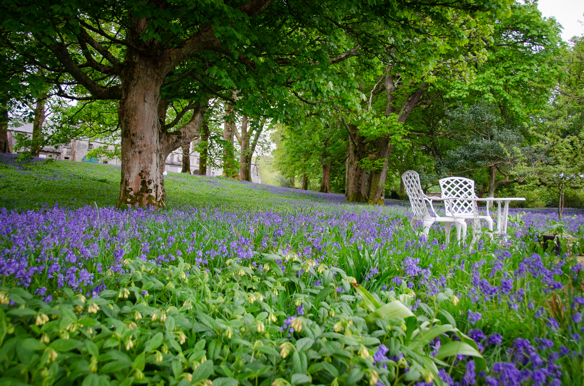 Where could possibly be a better place to while away an afternoon amongst the bluebells?