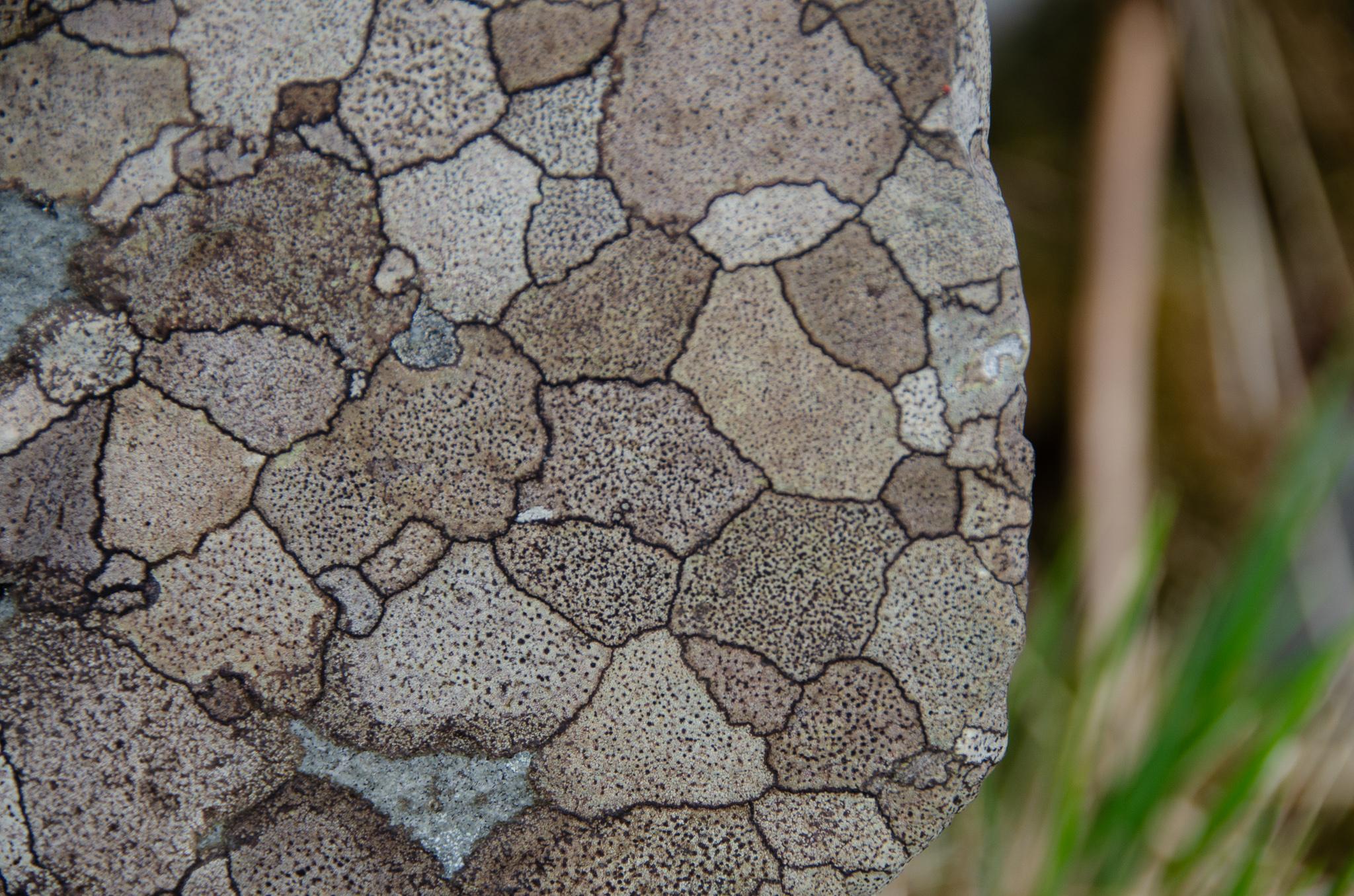 close-up- like a mosaic.