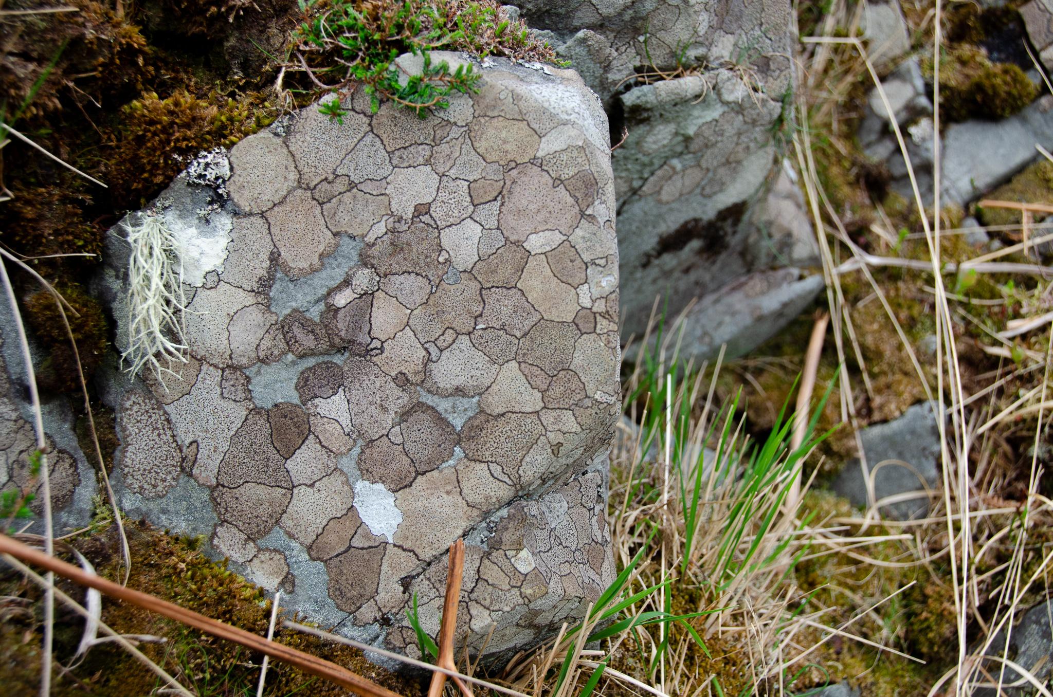 fantastic patterns in the rocks on Jura