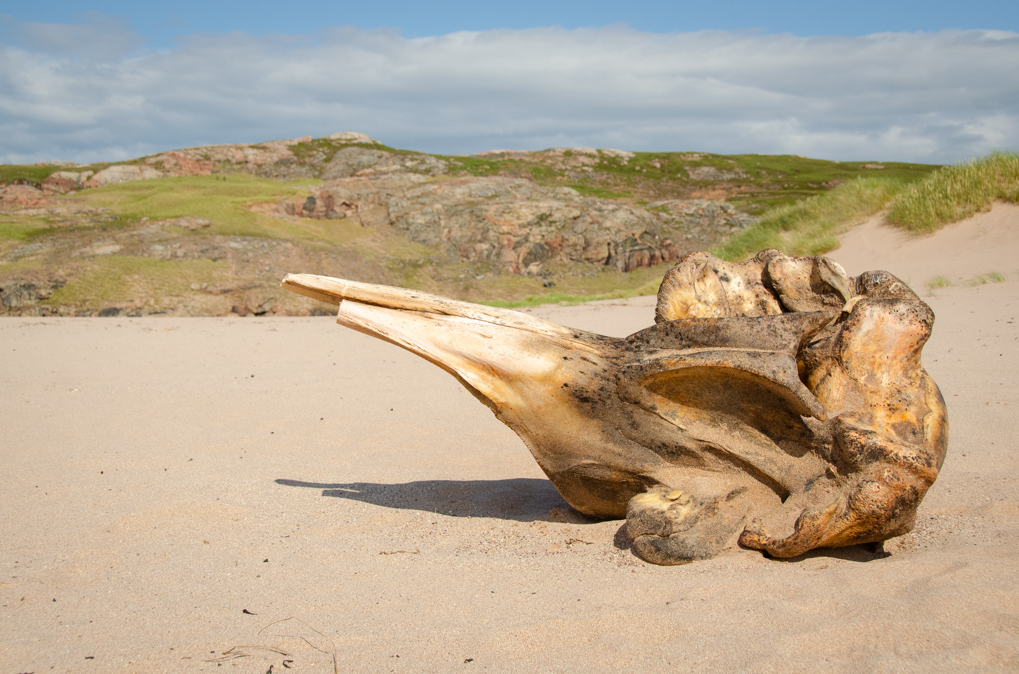 It's not every day you find a whale's skull washed up on the beach…