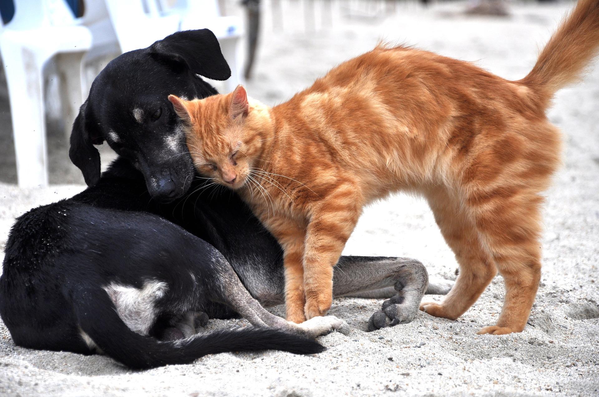 dogcatpic.jpg