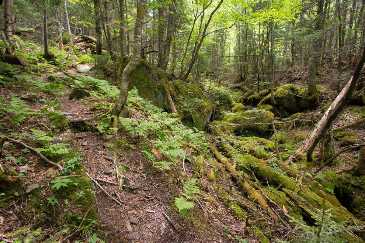 White Mountain National Park, New Hampshire - could this be the ravine?