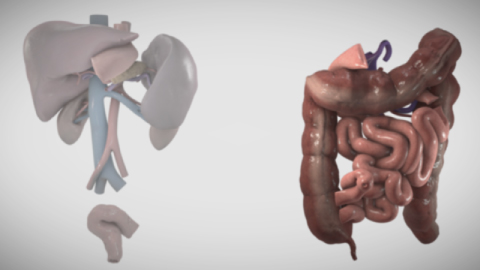 Still from ex vivo small bowel transplant video (Cred: The Toronto Video Atlas for Liver, Pancreas and Transplant Surgery)