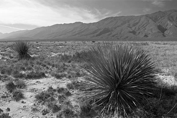 new-mexico-desert-grassland-64.jpg