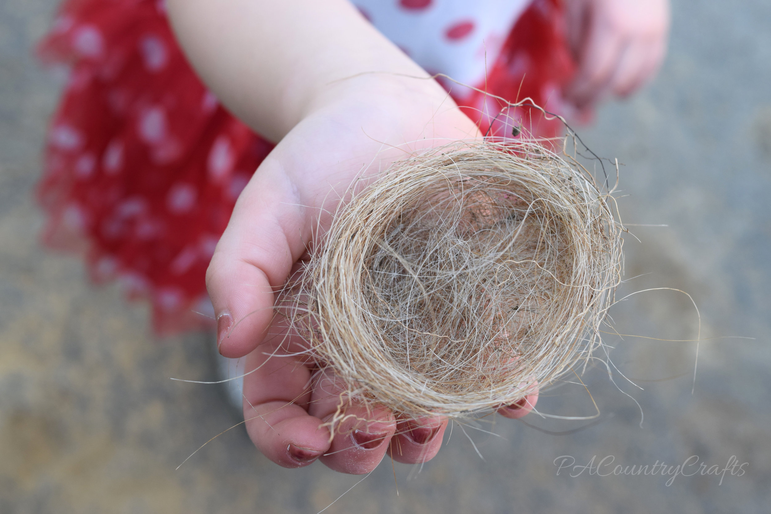 tiny birds nest