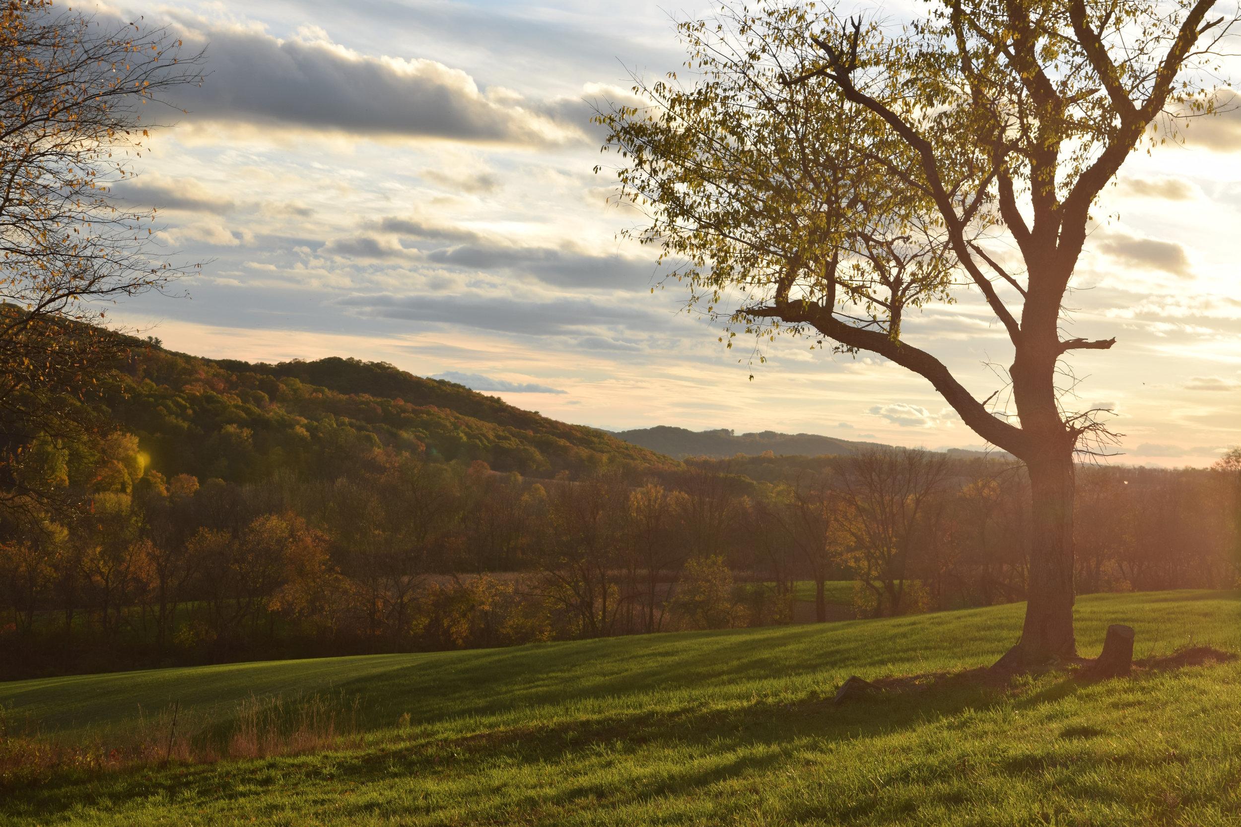sunny hill.jpg
