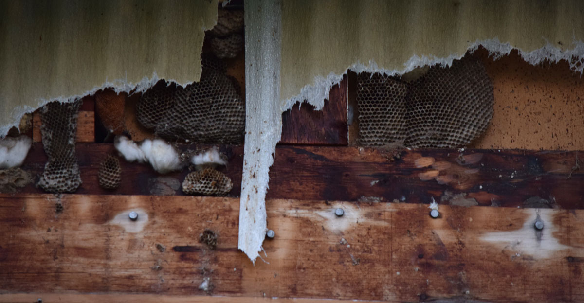 bees-nests.jpg