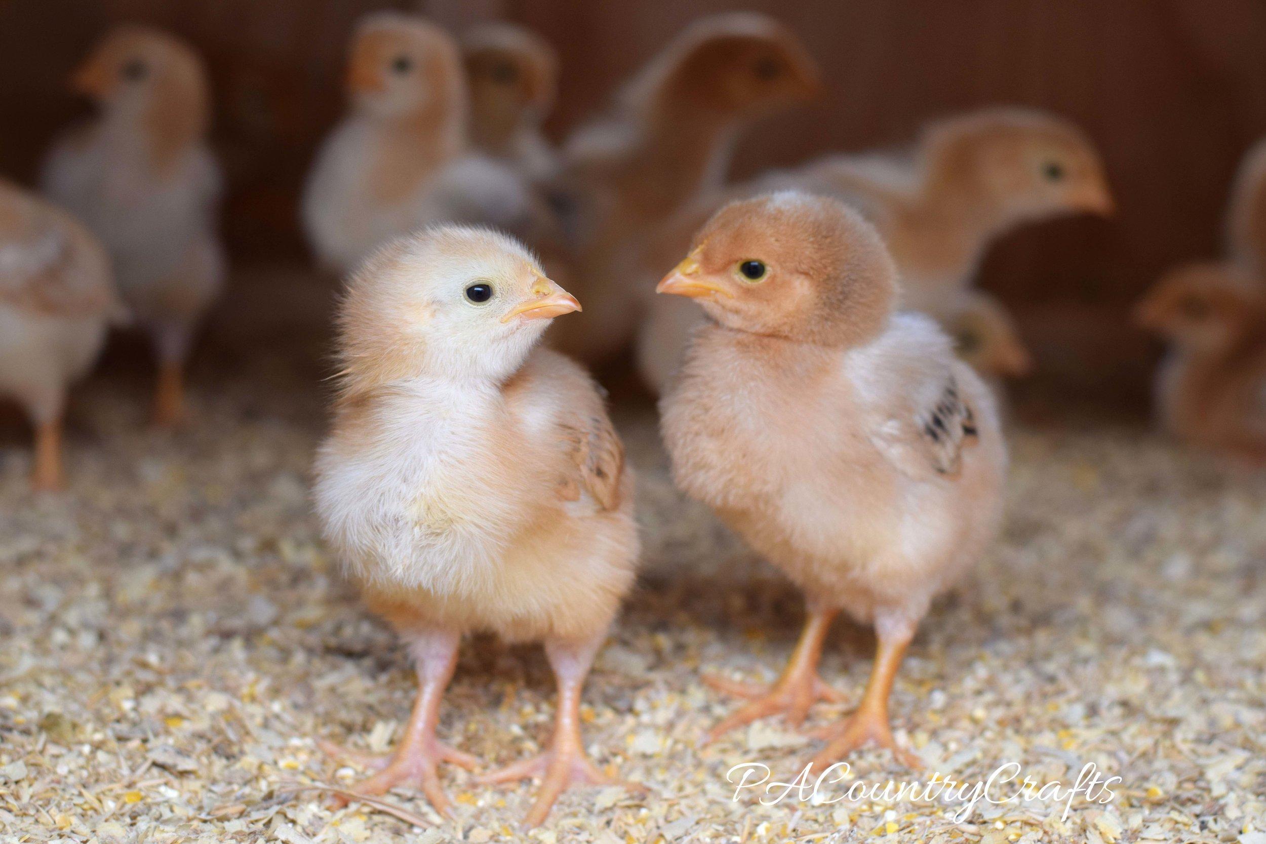 Raising Farm Kids