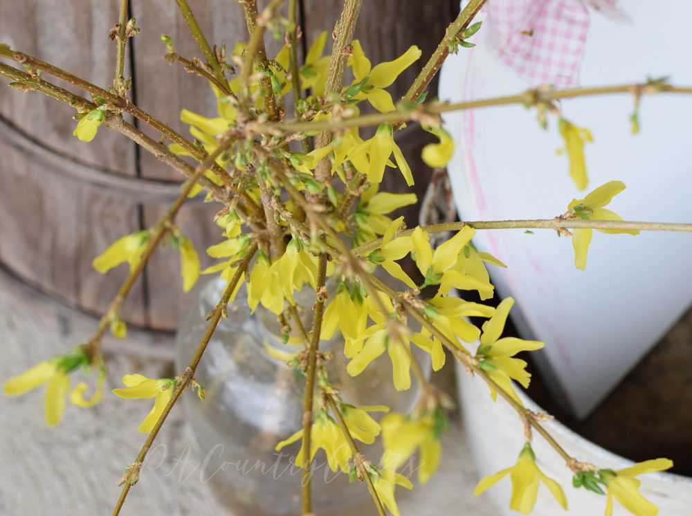 Forsythia clippings in an old jug for spring porch flowers