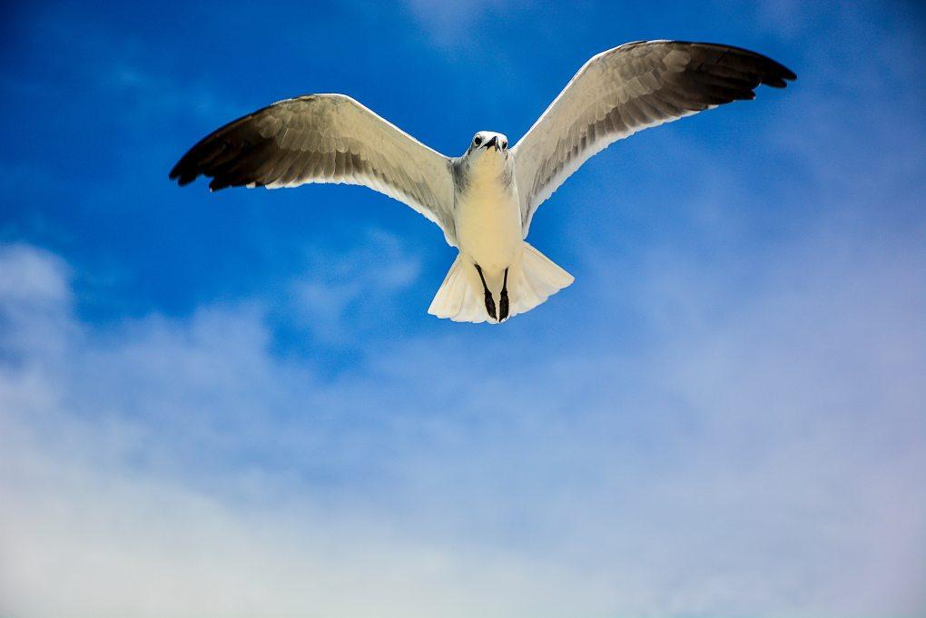 beak-bird-blue-sky-747109.jpg