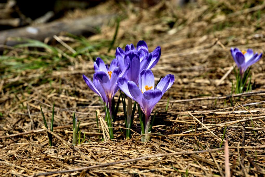 tatry-koscieliska-valley-winter-spring.jpg