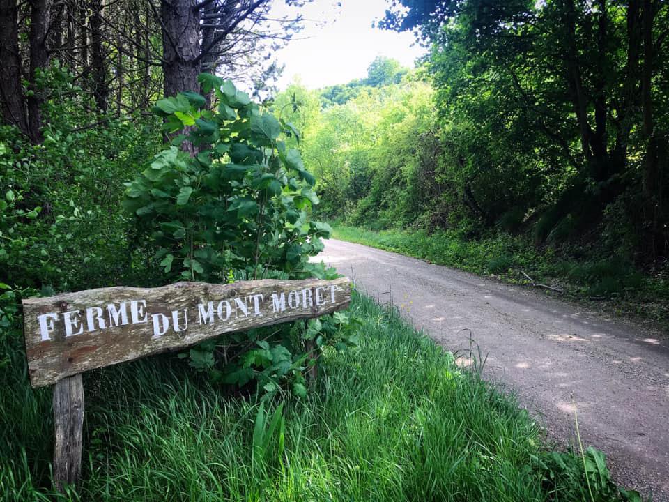 Pilgrim-path.jpg