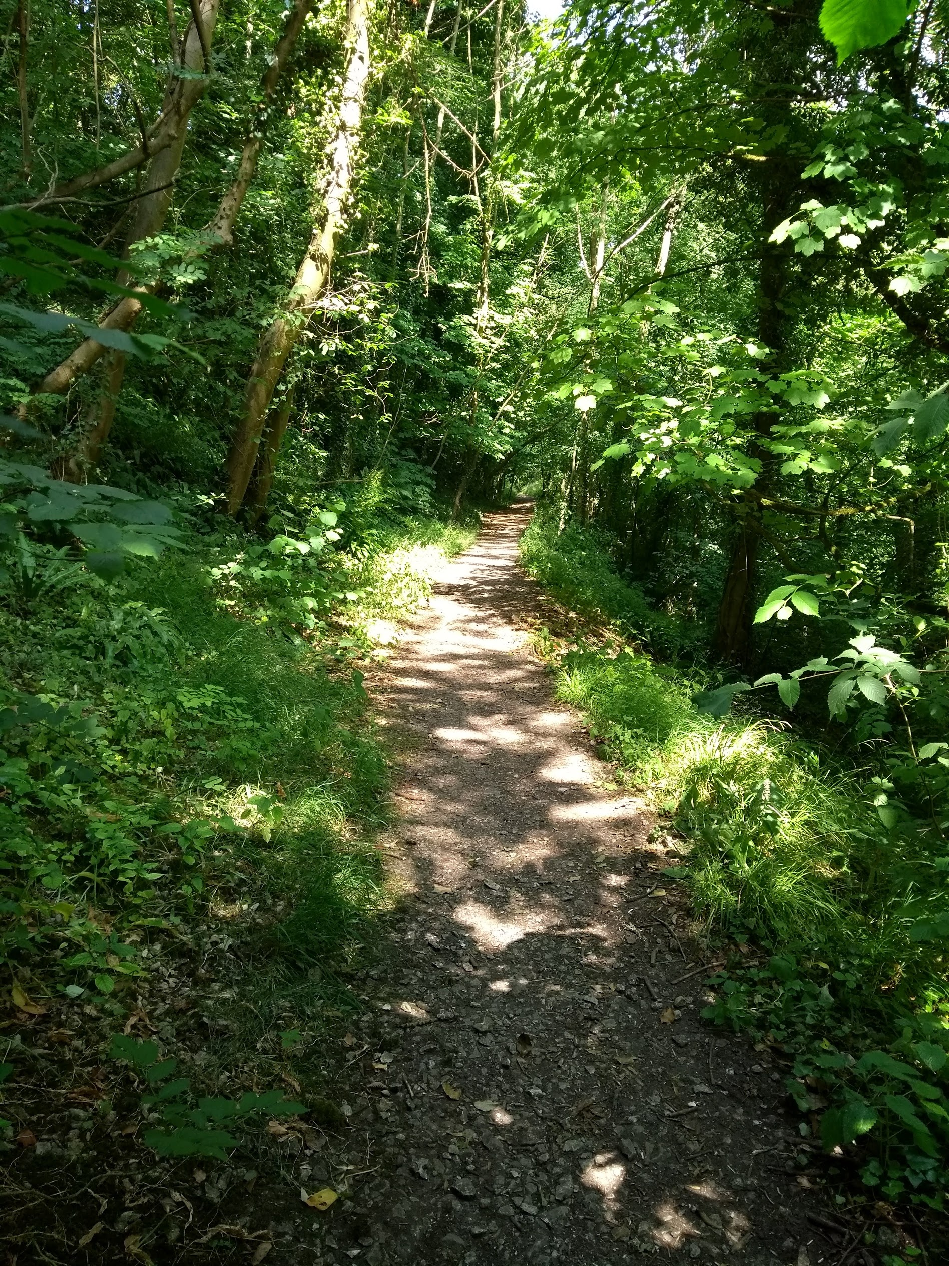 Make a Day of it by going on a walk in the area - There is a beautiful walk which runs past the studio entrance - click here to view it