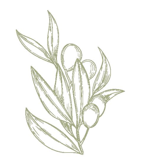 Plant-Prune-Logomark3-Color.PNG